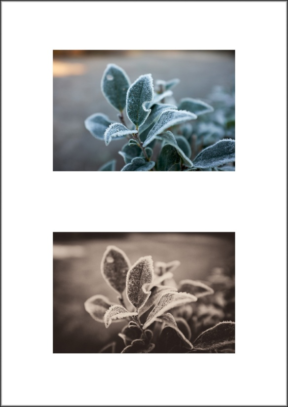 Frost Diptych 2016 1-2