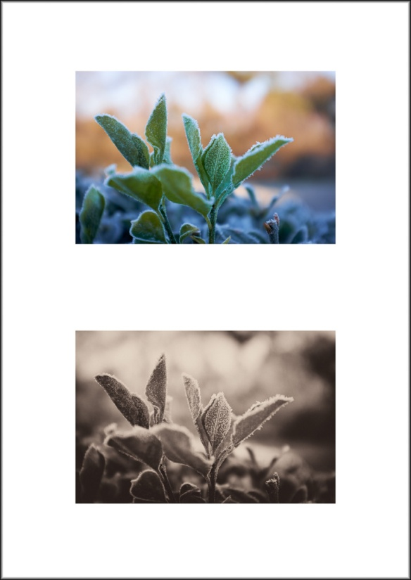 Frost Diptych 2016 2-2